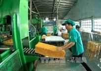Ngịch lý ở ngành công nghiệp chế biến cao su