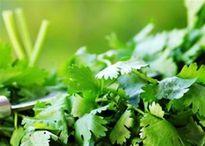 Rau mùi và 5 lợi ích sức khỏe