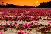 Mê mệt trước những điểm du lịch 'hot' nhất Nam Trung Bộ