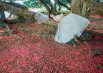 Cây lộc vừng di sản ở Phú Thọ trải thảm hoa đỏ dưới gốc