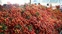 Bắc Giang: Vải thiều tiêu thụ thuận lợi