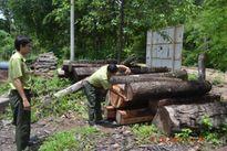 Tây Nguyên: Cam go cuộc chiến giữ rừng