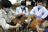 70% các bệnh truyền nhiễm ở người có nguồn gốc từ động vật