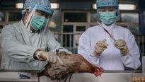 70% bệnh truyền nhiễm ở người có nguồn gốc từ động vật