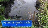 Cá chết do sông rạch ô nhiễm