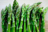 Làm giàu từ trồng măng tây xanh