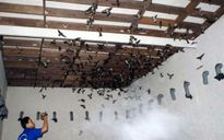 Cả nước có hơn 5.000 nhà nuôi chim yến