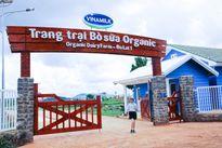 Trang trại bò sữa Organic ở Đà Lạt đạt tiêu chuẩn Châu Âu lần đầu tiên đón khách