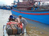Tàu thuyền của ngư dân Nghệ An hối hả ra khơi sau bão