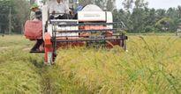 Dịch bệnh, lũ lớn về nhanh sầm sập đe dọa lúa thu đông