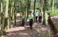 Tỷ lệ che phủ rừng toàn quốc ước đạt hơn 41%