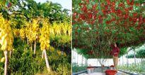 """Mãn nhãn những loại cây """"mắn"""" nhất thế giới, có cây cho hàng chục nghìn quả"""