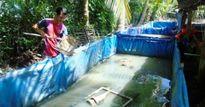 Cất bằng đại học vô tủ, kỹ sư trẻ lăn luộn với nghề nuôi lươn