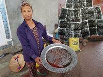 Người dân khu bãi rác Nam Sơn: 'Thu hoạch' 5kg ruồi/tuần