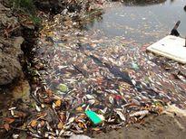 Cá trên sông ở Đầm Dơi tiếp tục chết