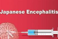 Những điều cần biết về bệnh viêm não Nhật Bản