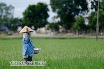 Sử dụng phân bón tại Việt Nam: Vãi cả tỷ đô xuống sông, xuống biển