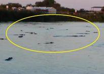 Lạnh xương sống với cảnh chục con cá sấu bơi ngập tràn trong hồ Florida