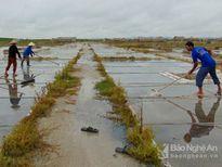 Diêm dân Nghệ An tiếp tục sản xuất muối sau bão