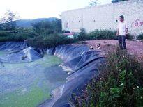 Hà Tĩnh: Đi chăn bò, bé gái 9 tuổi đuối nước dưới bể biogas
