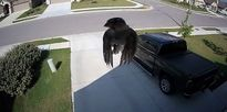 [Video] Camera ghi lại cảnh chim đang bay nhưng không đập cánh?