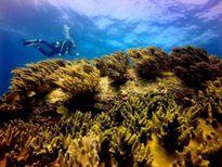 Mời chuyên gia nước ngoài đánh giá tác động môi trường tại vùng biển Vĩnh Tân