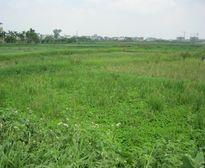 Choáng với kiểu đấu giá đất dự án Hà Nội