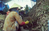 Hàng loạt hàng nông sản tiếp tục chờ... giải cứu