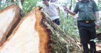 Xử lý nghiêm vụ chuyển đổi 424ha rừng trái quy định tại Phú Yên