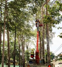 TP Hồ Chí Minh: Cây xanh đốn hạ sẽ làm bàn, ghế phục vụ nơi công cộng