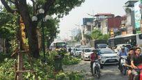 Tắc nửa con phố, nhân viên Công ty Cây xanh bình chân tỉa cây