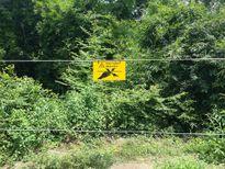 Đồng Nai xây hàng rào điện bảo vệ voi rừng