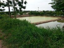 Thanh Oai: Bãi rác 3000 m2 sử dụng sai mục đích, lãnh đạo xã 'đóng cửa' với báo chí