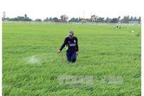Hiến kế cải tạo đất lúa ở An Giang