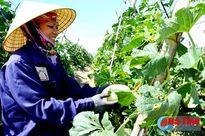 Hỗ trợ nông dân sản xuất nông nghiệp sạch theo hướng hữu cơ, hàng hóa
