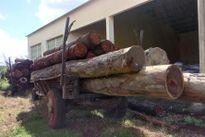 Gia Lai: Bắt giữ xe công nông chở gỗ trái phép