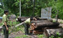 Lâm Đồng: Phát hiện 543 vụ vi phạm về rừng