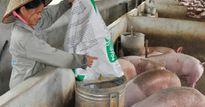 Giá lợn hôm nay 12.8: Lợn 2 miền đồng loạt giảm còn 30.000 đ/kg