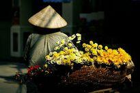 Cúc vàng xôn xao