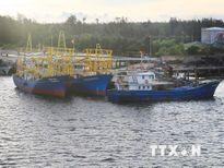 Quảng Trị: Hơn 3 triệu USD lắp đèn LED cho tàu đánh bắt xa bờ