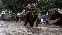 Nepal huy động voi giải cứu hàng trăm du khách mắc kẹt trong lũ