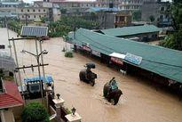Nepal: Lũ lụt nghiêm trọng, người dân sơ tán bằng voi