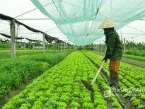 Đại tá Nguyễn Hữu Cầu: Phải quyết liệt ngăn chặn nạn phá rừng