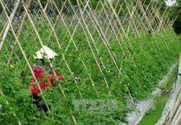 Bắc Giang đầu tư trên 1.500 tỷ đồng quy hoạch vùng nông nghiệp công nghệ cao