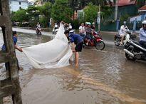 Người dân thành phố 'trổ tài ngư dân' bắt cá bằng màn trên đường