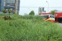 Phường Trung Hòa, quận Cầu Giấy, Hà Nội: Cỏ mọc um tùm trên đường Nguyễn Chánh