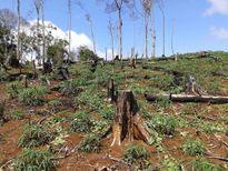 Khởi tố nguyên lãnh đạo Công ty lâm nghiệp Đức Hòa vì để mất rừng