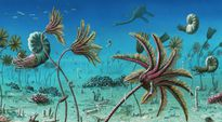 Siêu kỷ băng hà giúp tổ tiên động vật phát triển bùng nổ