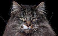 Giải bài toán tìm mèo, xác định người thông minh