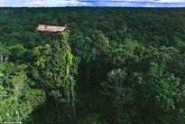 Bộ tộc sống trên ngọn cây bị đồn ăn thịt đồng loại